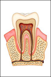 root canals in laredo, tx